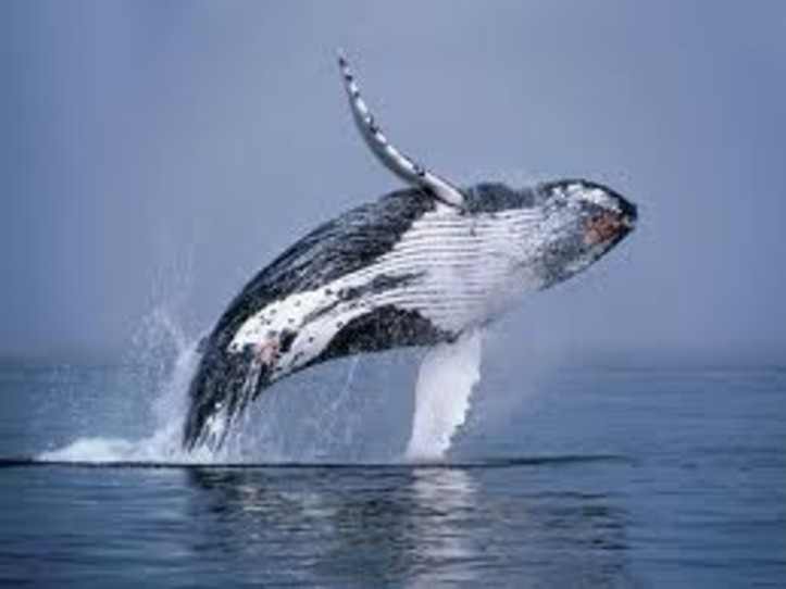 Farralon Islands Whale watching Trip