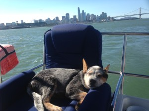 Sailing Charter Gift Certificates - San Francisco Bay California