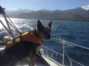 brody and captain josh on a sailing charter in sf bay