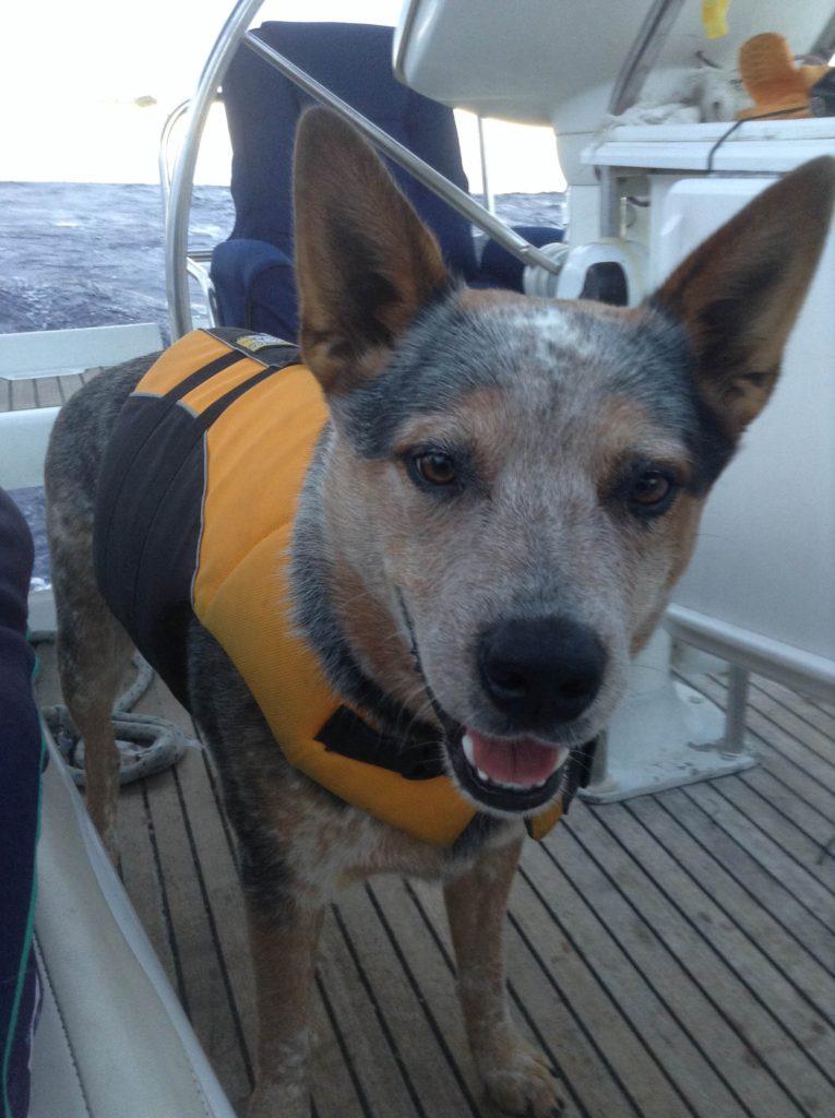 sailboat charter sf bay
