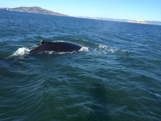 whale watching on a charter in sf bay